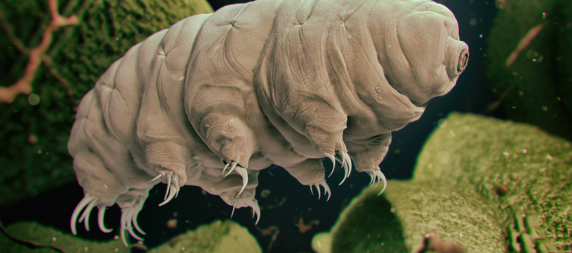 'Wacky' Tardigrade Experiment May Help TBI Victims